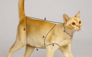 Одежда для котов своими руками